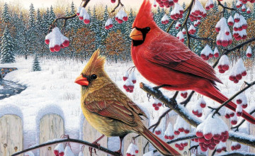 Cardinal Bird Wallpaper