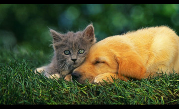 Cat And Dogs Wallpapers