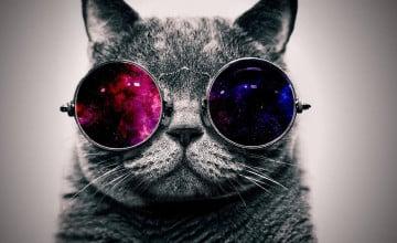 Cat Galaxy Wallpaper