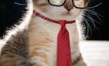Cat Wearing Glasses Wallpaper