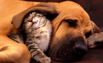 Cats Dogs Screensavers and Wallpapers