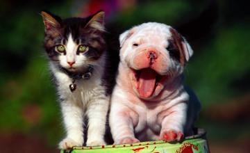 Cats Dogs Wallpaper Desktop