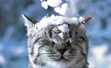 Cats in Snow Wallpaper