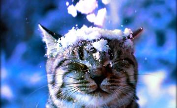 Cats in Winter Wallpaper