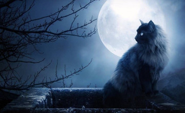 Cats On The Moon Wallpapers