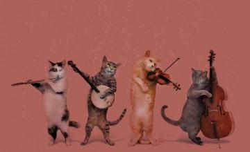 Cats Wallpaper Border