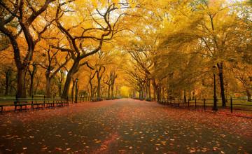 Central Park Fall Wallpaper