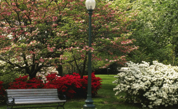 Central Park Spring Wallpaper