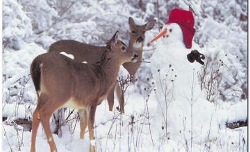 Christmas Animal Wallpaper
