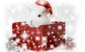 Christmas Bunny Wallpaper