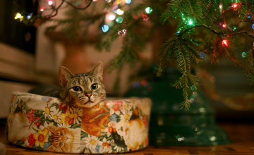 Christmas Cat Wallpaper