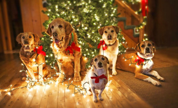Christmas Of Dogs Wallpapers