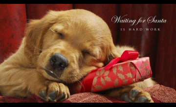 Christmas Wallpaper with Dogs