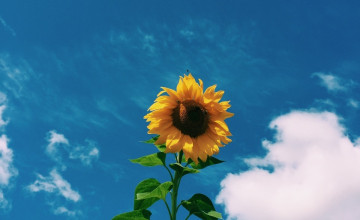 Clouds Sunflower Aesthetic Wallpapers