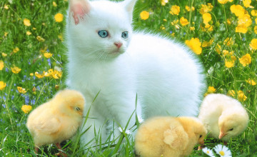 Computer Wallpaper Spring Cats