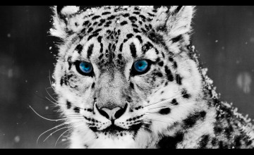 Cool Animal HD Wallpaper