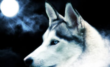 Cool Dogs Wallpapers