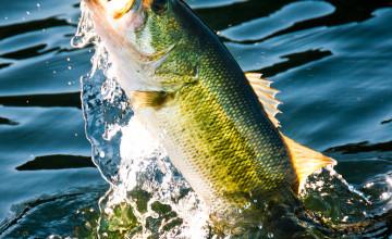 Cool Fishing Wallpaper