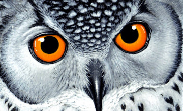 Cool Owl Wallpapers