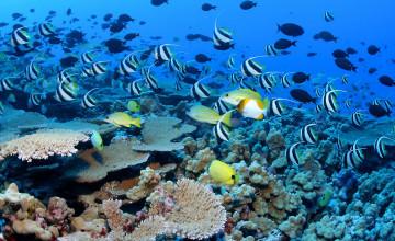 Coral Reef Wallpaper HD