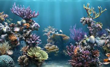 Coral Reef Wallpaper in HD
