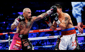 Cotto Wallpaper