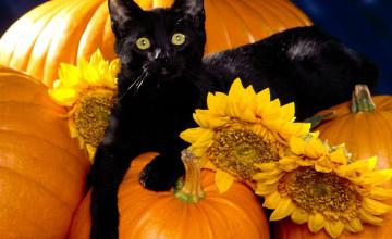 Cute Cat Halloween Wallpaper
