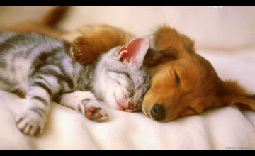 Cute Cats and Dogs Wallpaper