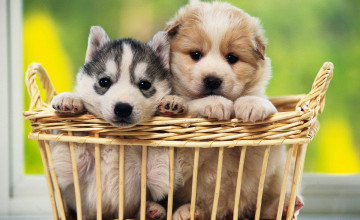 Cute Dog Desktop Wallpaper Free