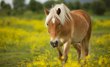 Cute Horse Wallpapers
