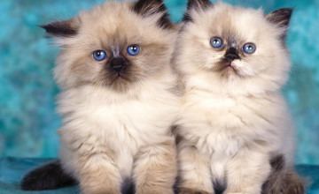 Cute Kittens Wallpapers