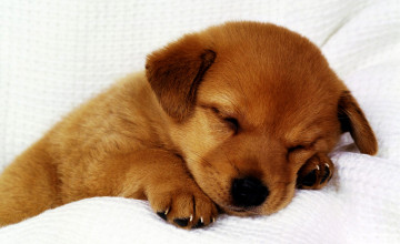 Cute Puppies for Wallpaper