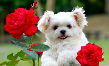 Cute Puppy Pictures For Wallpaper
