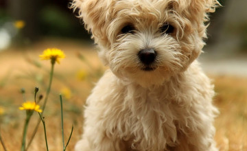 Cute Puppy Wallpapers For Desktop