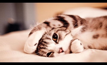 Cutest Animal Ever Wallpapers