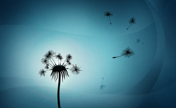 Dandelion Wallpapers