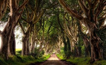 Dark Hedges Northern Ireland Wallpaper