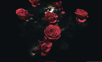 24 Dark Rose Wallpapers On Wallpapersafari