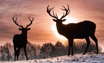 Deer Background Wallpaper
