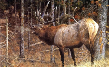 Deer Wallpapers and Screensavers