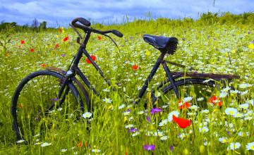 Desktop Wallpaper Bicycles and Flowers