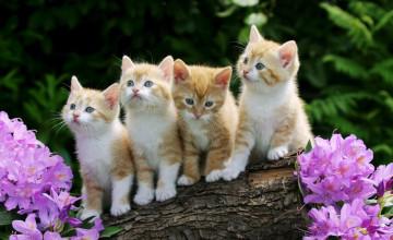 Desktop Wallpaper Cats and Kittens