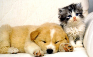 Dogs and Cats Wallpaper