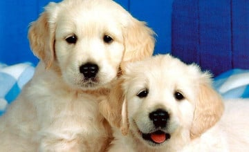 Dogs Images Wallpaper