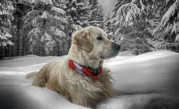 Dogs in the Snow Wallpaper