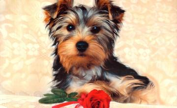 Dogs Photos for Wallpaper