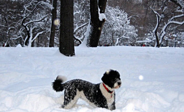 Dogs Playing in Snow Wallpaper