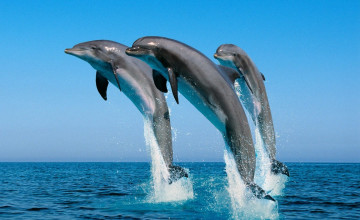 Dolphin Pictures Wallpaper