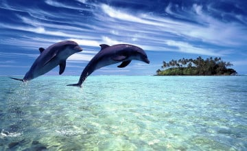 Dolphins Images Wallpaper