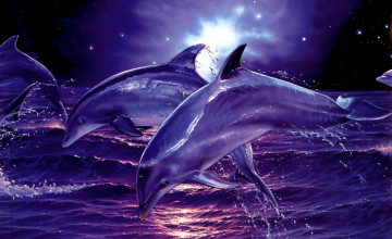 Dolphins Wallpapers for Desktop